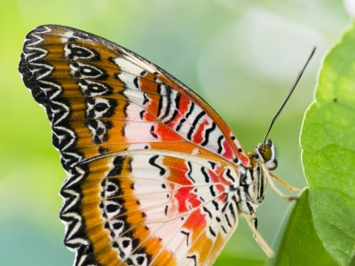 Photo for the news post: Twenty Years of Floating Beauties at Carleton Butterfly Show
