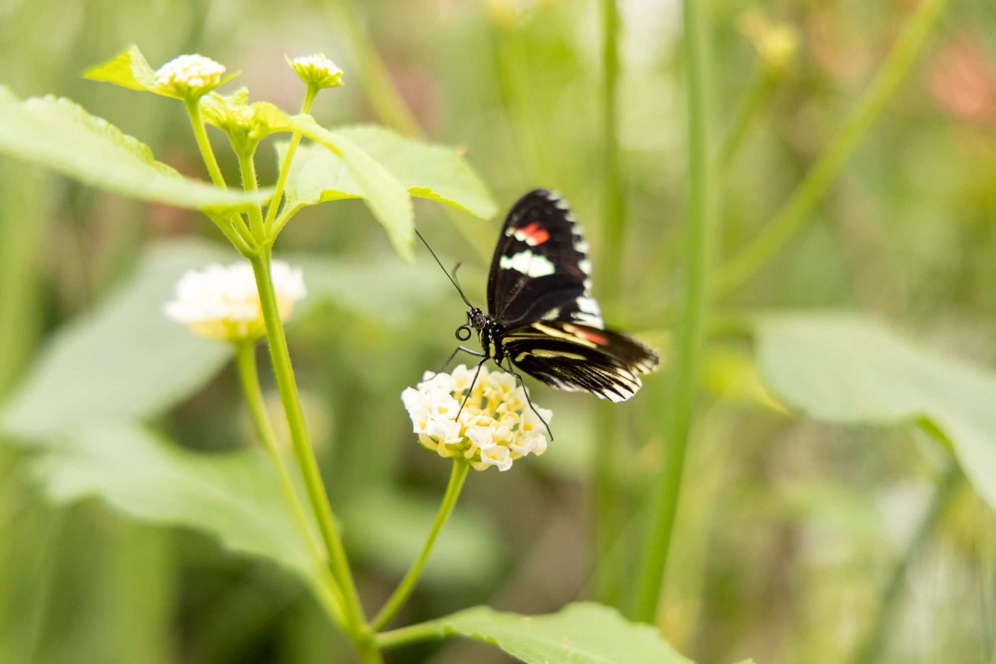 A black butterfly against a lush green background.
