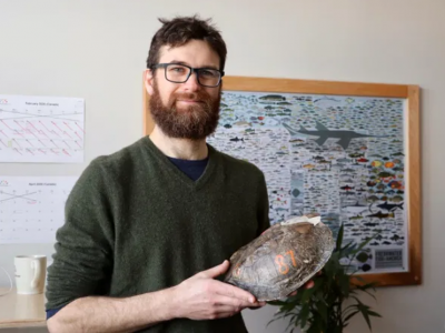 Photo for the news post: Carleton turtle researcher among first to successfully use 3D-printed animal replicas