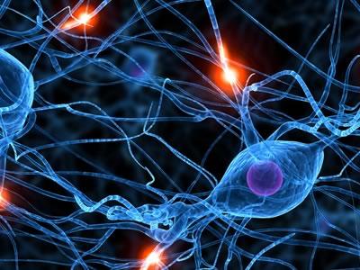 Photo for the news post: Neuroscience